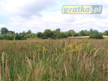 Działka rolna Gorzów Wielkopolski