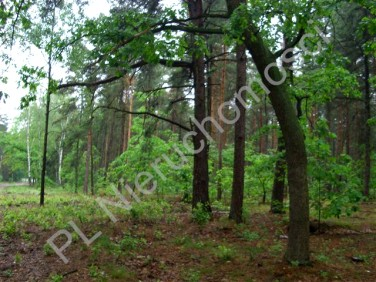 Działka budowlana Sękocin-Las