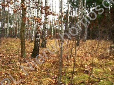Działka leśna Lesznowola