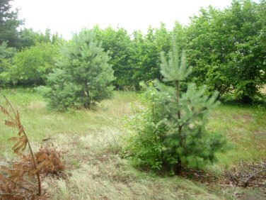 Działka leśna Ruda