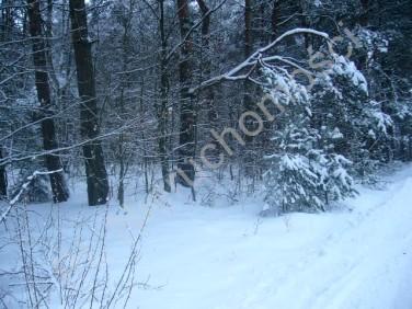 Działka leśna Pniewy