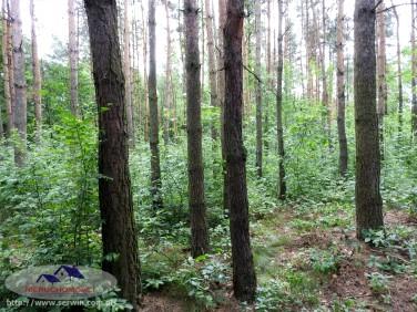 Działka leśna Sieradza