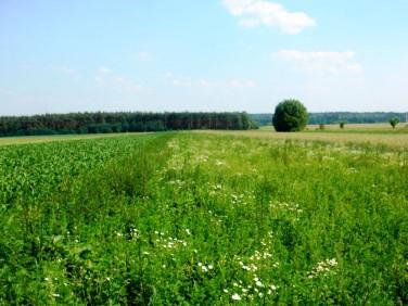 Działka rolna Kalisz