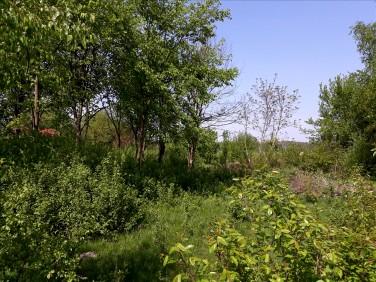 Działka siedliskowa Jarocin