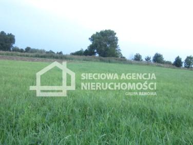 Działka rolna Tujsk