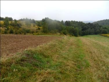 Działka rolna Wielka Wieś
