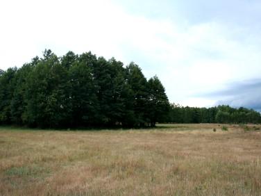 Działka siedliskowa Kucbork