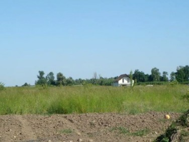 Działka rolna Dołuje