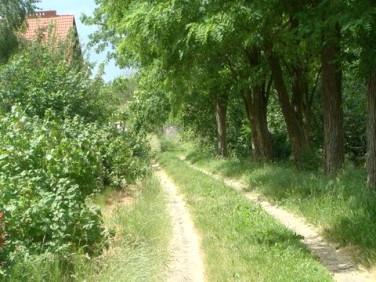 Działka Wąwelnica