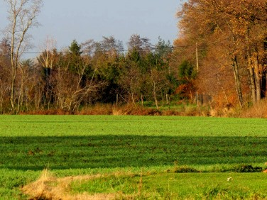 Działka rolna Ligota