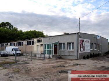 Lokal Krzeszyce