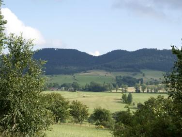 Działka rolno-leśna Rybnica Leśna