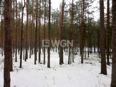 Działka leśna Żarki