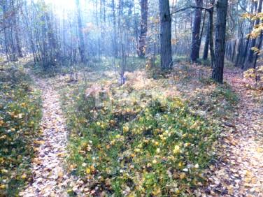 Działka leśna Mirów