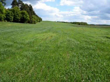 Działka rolna Bukowina
