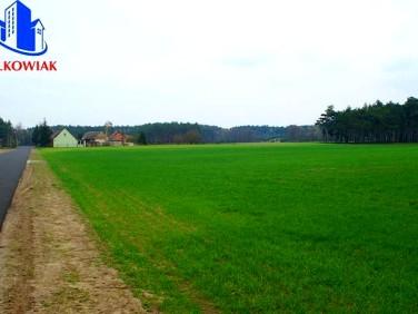 Działka budowlana Sulęcin