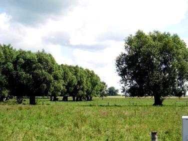 Działka rolna Dobrzyniewo Duże