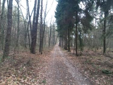 Działka leśna sprzedam