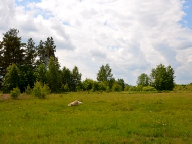 Działka budowlana Błotnia