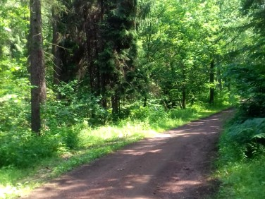 Działka leśna Rybnik