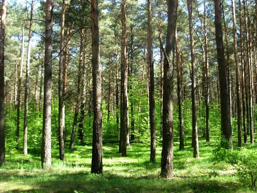 Działka leśna Glinica