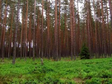 Działka leśna Choszczno