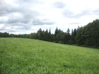 Działka leśna Orłowo