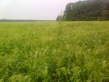 Działka rolna Żelisław