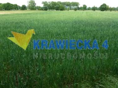 Działka rolna brzezie