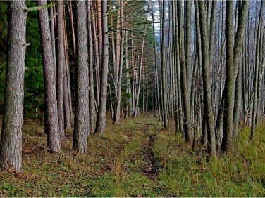 Działka leśna Cekcyn