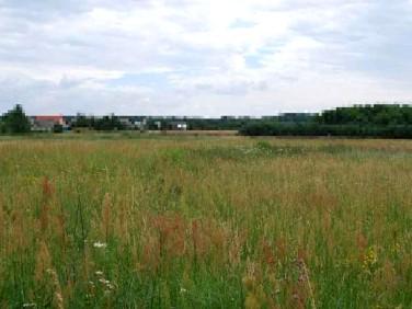Działka budowlana Białuń