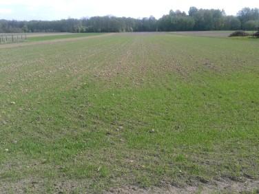 Działka budowlano-rolna Rudnik