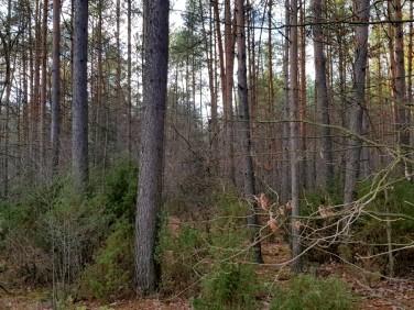 Działka leśna Chojewo