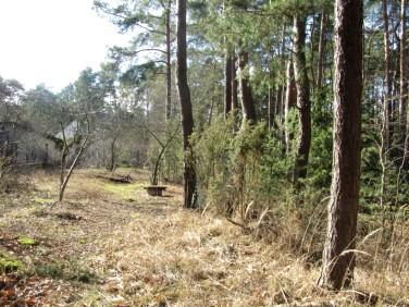 Działka leśna Józefów