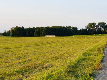 Działka rolna Turówka Stara