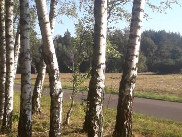 Działka leśna Budy Grabskie