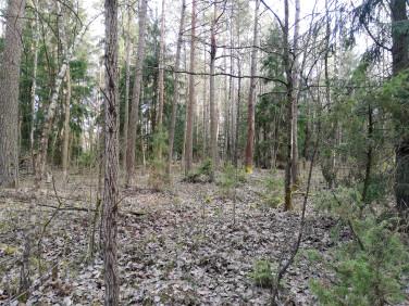 Działka leśna Łużany