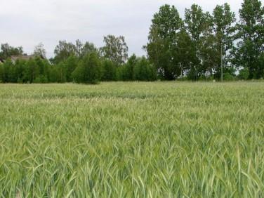 Działka Grzebienisko