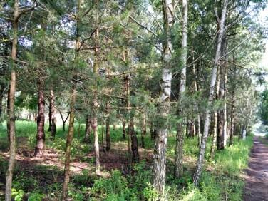 Działka leśna Warszawa sprzedam