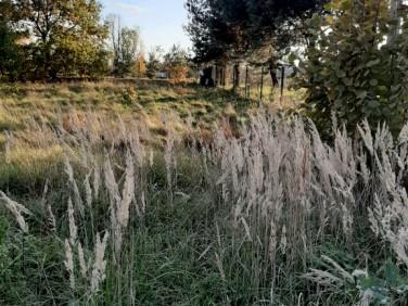 Działka Bieruń