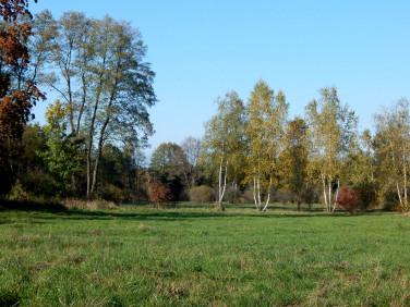 Działka siedliskowa Grzegorzewice
