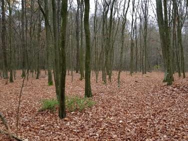 Działka leśna Samoklęski sprzedam