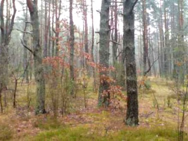 Działka przy lesie