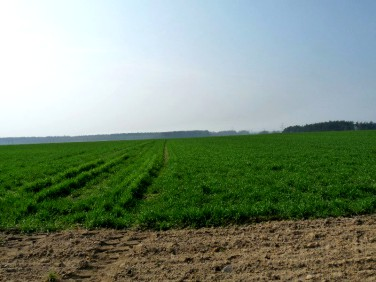 Działka rolna Grzędzice