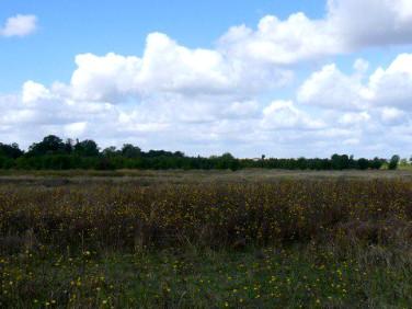 Działka rolna Będargowo sprzedam
