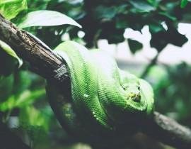 Wąż na gałęzi
