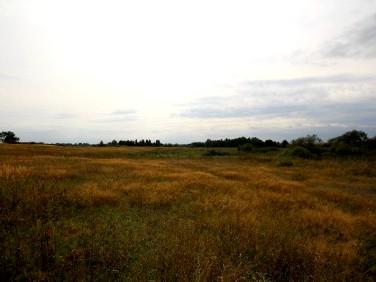 Działka rolna Łobez