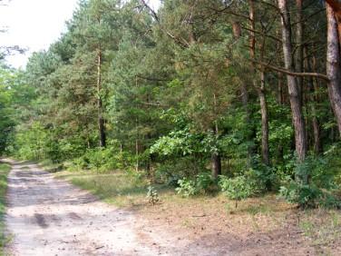 Działka leśna Toruń
