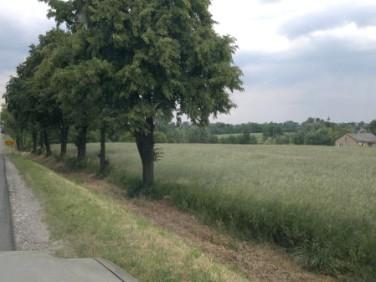 Działka budowlano-rolna Pacanów