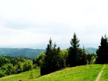 Działka leśna Ochotnica Górna